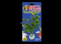 Betta Növény – Filodendron