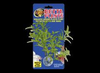 Betta Növény – Juharlevél