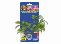 Betta Növény – Könnyezőpálma