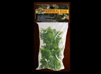 Amazóniai Filodendron -Természetes növényzet (közepes)